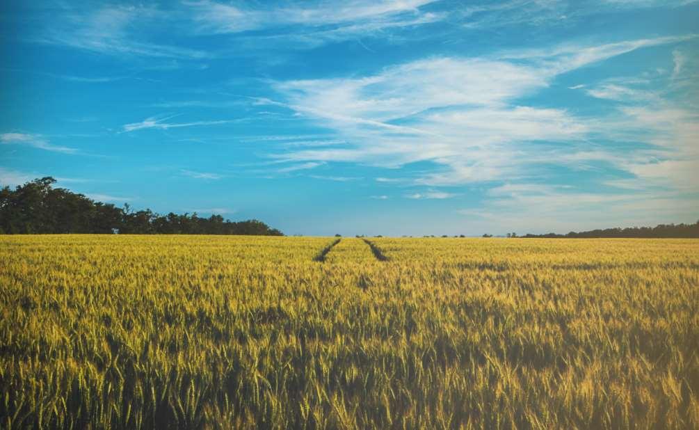Científicos de la US demuestran que es posible y viable eliminar el diurón de los terrenos en menos de 6 meses
