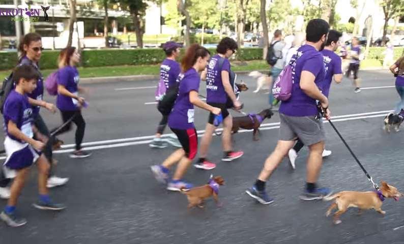 La Asociación Perrotón trabaja por la tenencia responsable de mascotas
