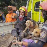 Héroes anónimos rescatan a miles de animales atrapados por el Volcán de Fuego de Guatemala