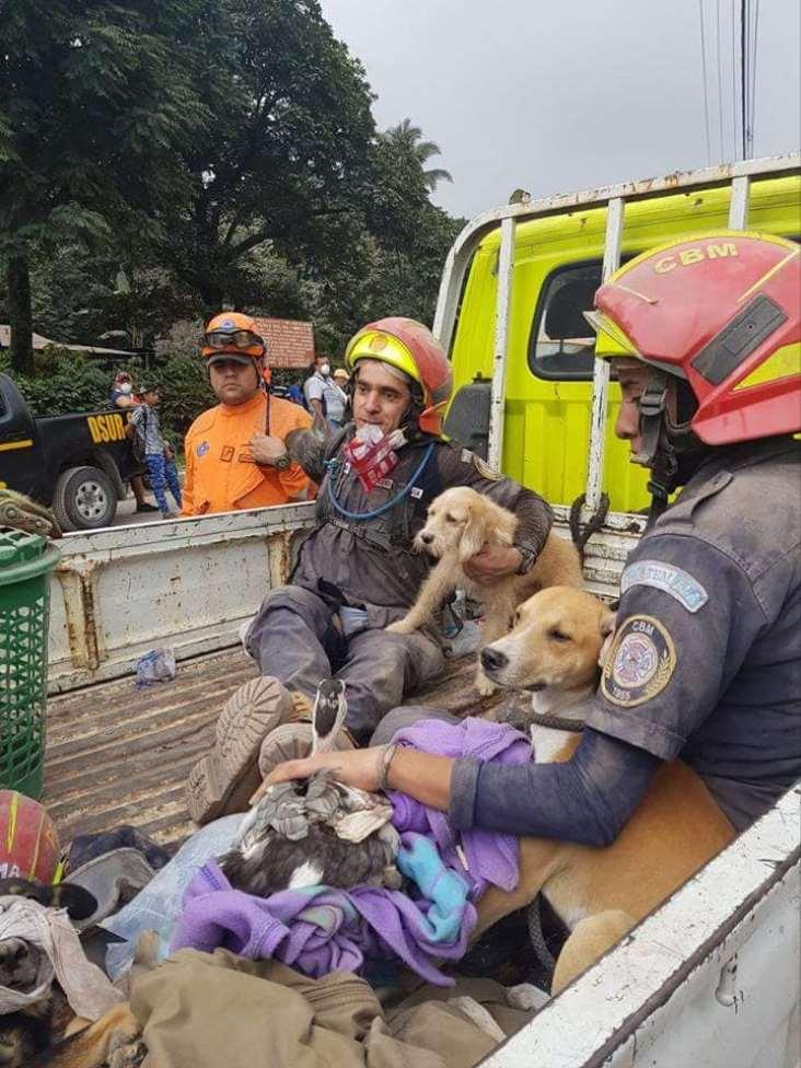 Los trabajos de las ONG y protectoras de animales se centran en los refugios donde las personas han evacuado a sus mascotas