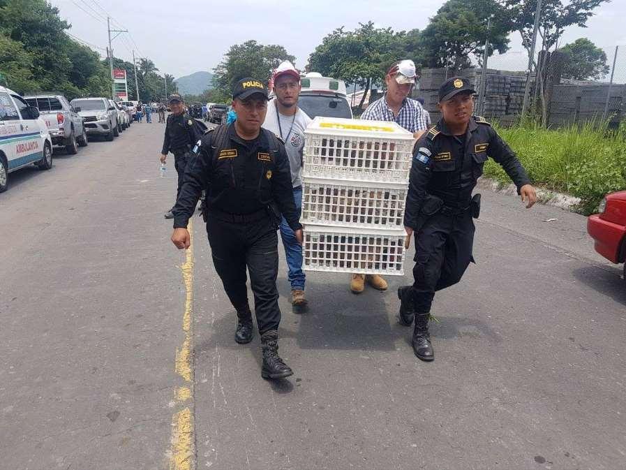 Miles de animales atrapados por el Volcán de Fuego de Guatemala han sido rescatados por héroes anónimos