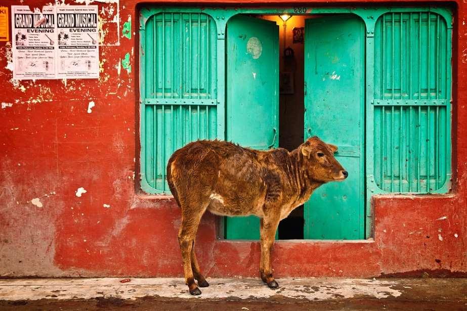 Un estado de la India considerará a los animales como personas jurídicas
