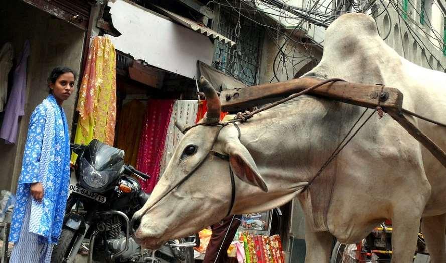 Entre las instrucciones para prevenir la crueldad se encuentran las regulaciones sobre el transporte y encierro de animales