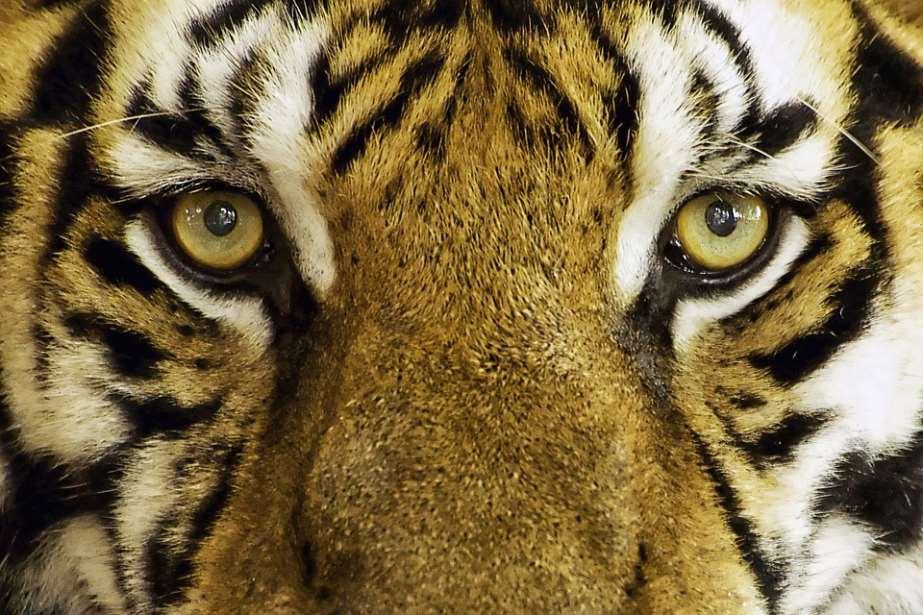 A través de este dictamen, a los animales se les ha otorgado esta misma condición de persona jurídica