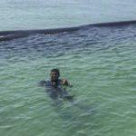 Ballena rorcual rescatada en una playa de México
