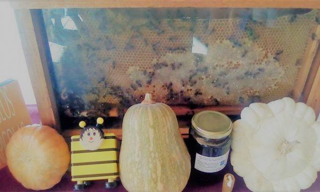 Bee Garden celebra una Jornada de Puertas Abiertas en el Día Mundial del Turismo
