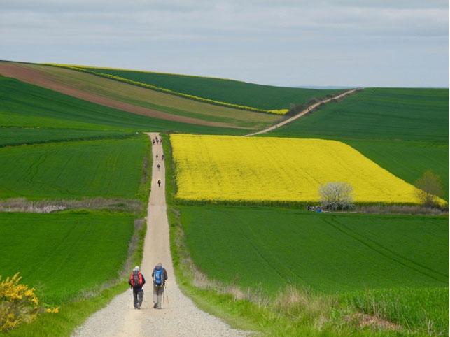 El segundo premio ha recaído en el italiano Giorgio Mazzoldi, con una fotografía de los campos riojanos, a la salida en Logroño, cubiertos de verde y amarillo
