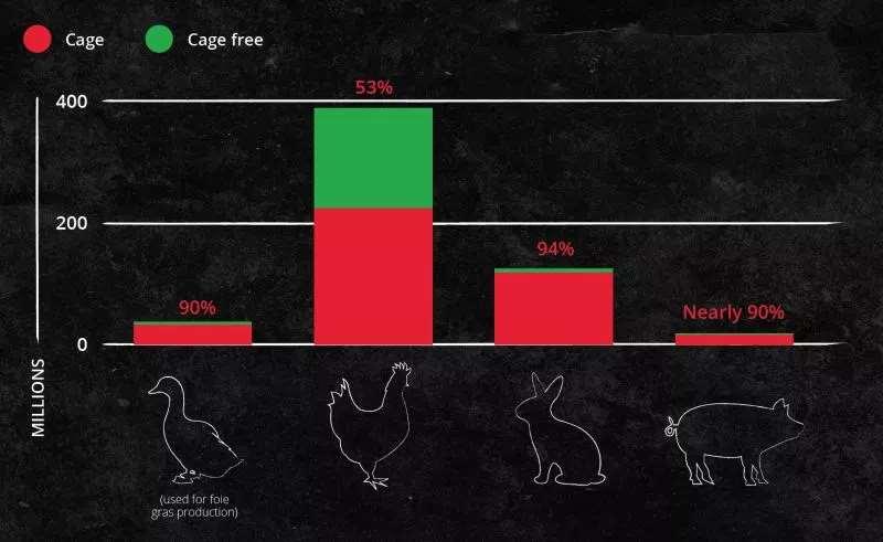 Animales de granja enjaulados en la Unión Europea. Fuente: End The Cage Age