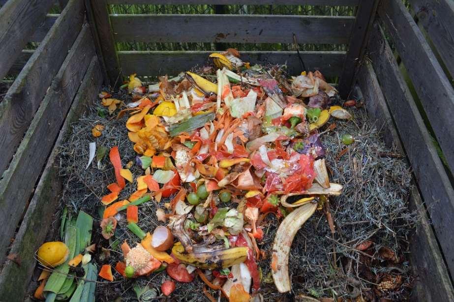 Cada persona genera al año casi media tonelada de basura, de la cual cerca de un 40% son residuos orgánicos