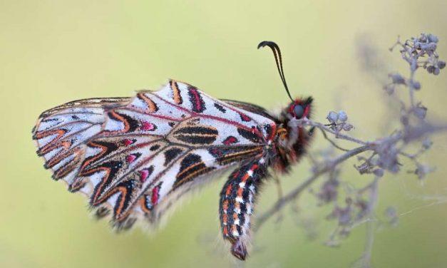 Crean la primera guía para la toma de decisiones sobre biodiversidad