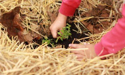 Propuestas de Ecofiscalidad de ONG ecologistas