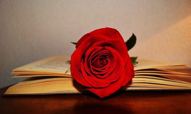 350 rosas en premios en el concurso Rosas Sant Jordi cuya participación ya está abierta