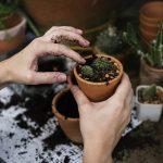 'Jardinería por el Clima': un curso con el que satisfacer la urgencia ambiental