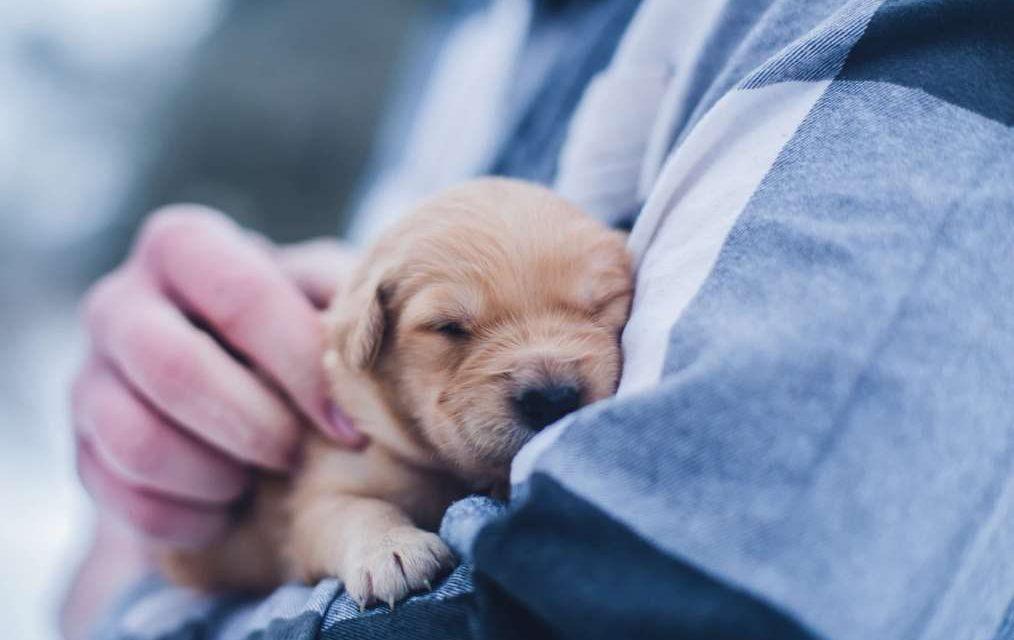 La influencia positiva de las mascotas en nuestras vidas