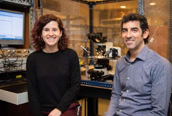 Los investigadores Alba Andrés-Bilbé y Xavier Gasull, de la Facultad de Medicina y Ciencias de la Salud, del Instituto de Neurociencias de la Universidad de Barcelona (UBNeuro) y del Grupo de Investigación en Neurofisiología del IDIBAPS. Foto cortesía de UB