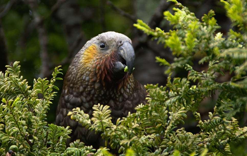 Los pueblos indígenas y las comunidades locales son reconocidos como ejemplos a seguir en la protección de la biodiversidad
