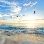 IPBES publica una exhaustiva evaluación sobre biodiversidad y ecosistemas
