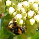 Miel de madroño para frenar el cáncer de colon