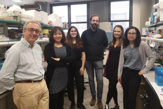 equipo del IRB Barcelona que identificó la proteína para combatir el hígado graso no alcohólico