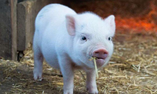 Feliz Semana Mundial Sin Carne 🌿