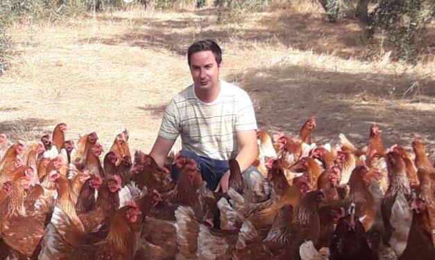 Cuidando gallinas felices