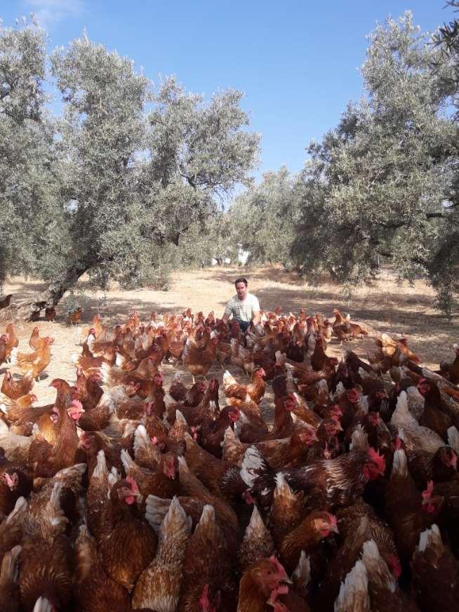 La motivación de Víctor es inagotable, cuidando de sus gallinas felices