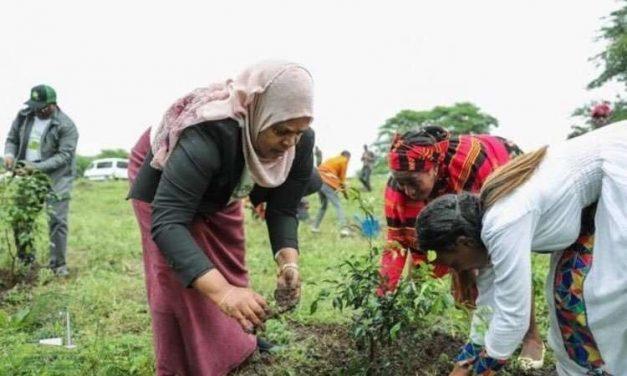Etiopía planta 353 millones de árboles en un día