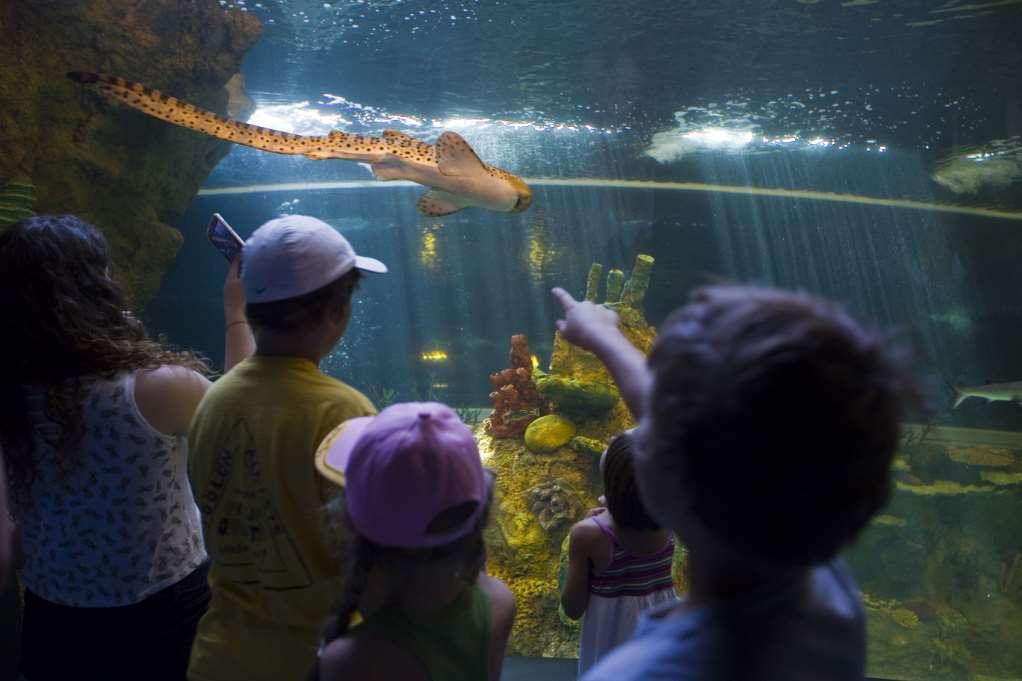 Una vez más, vuelve a consolidarse el Parque de las Ciencias como destino turístico de referencia