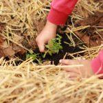 Movimiento mundial #pornuestroplaneta para plantar y regar árboles el 7 de septiembre