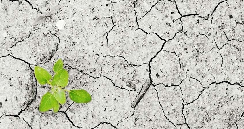 Más de 300 organizaciones españolas secundan la Huelga Mundial por el Clima