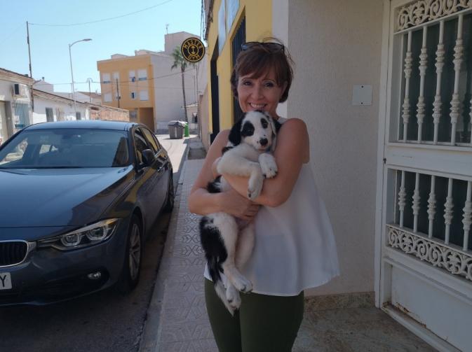 15 toneladas de alimentos y materiales para protectoras de animales de Levante
