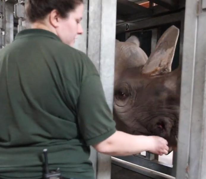 Los trabajadores del zoo se sorprendieron también por la personalidad y actitud que mostró Doppsee durante el proceso