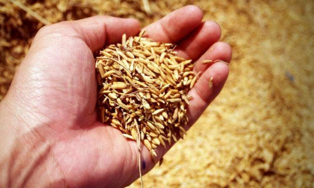 Descontaminar ciudades con residuos de cáscaras de arroz