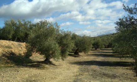 Fomento de la biodiversidad en olivares
