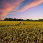 Por un modelo agrario y ganadero justo
