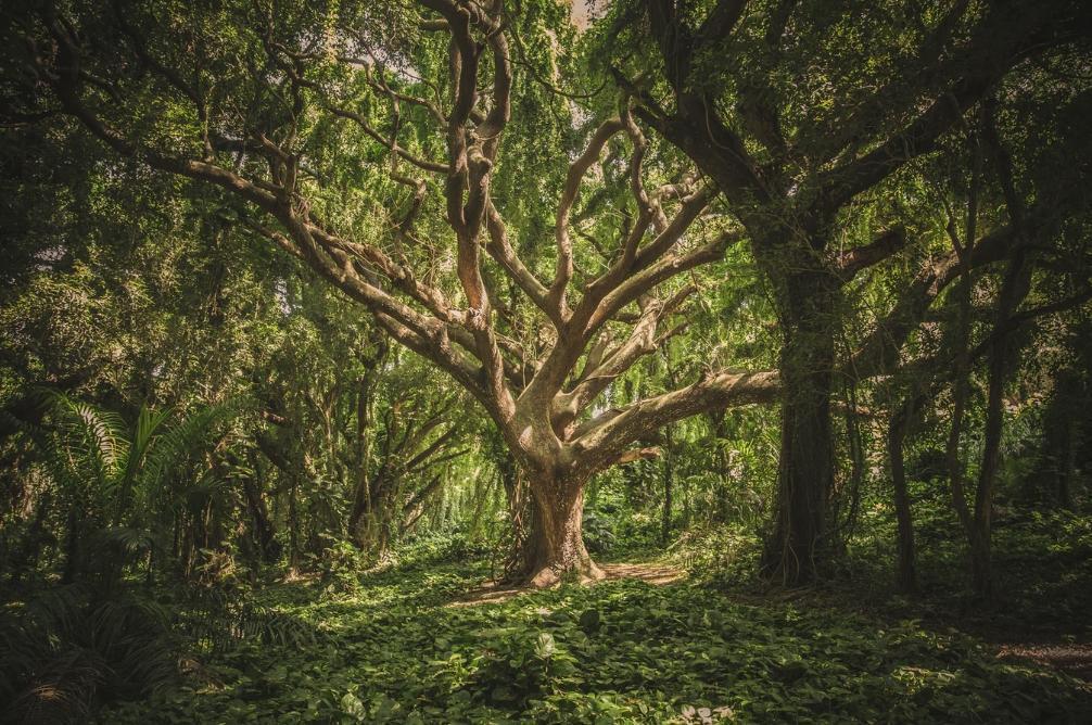 Conservar y restaurar los bosques para preservar la biodiversidad