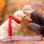 Campaña contra el abandono animal #NoalAbandono