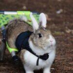 El refugio de animales La Vedruna abre un crowdfunding para mudarse