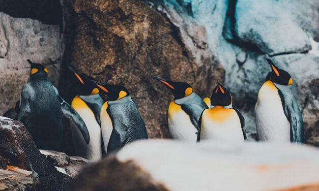 Un 20% más de colonias de pingüinos emperadores en la Antártida