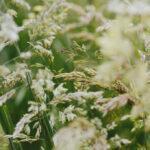 Desarrollan un nuevo pesticida natural para eliminar plagas y patógenos