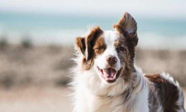 5 razones de peso por las que adoptar a un perro
