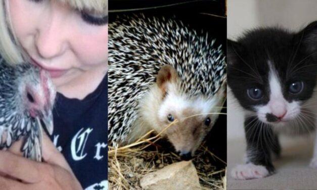 'Crowdfunding', la apuesta de organizaciones para salvar vidas de animales