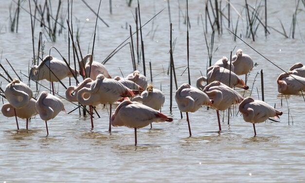 España quiere restaurar 20.000 hectáreas de humedales en esta década