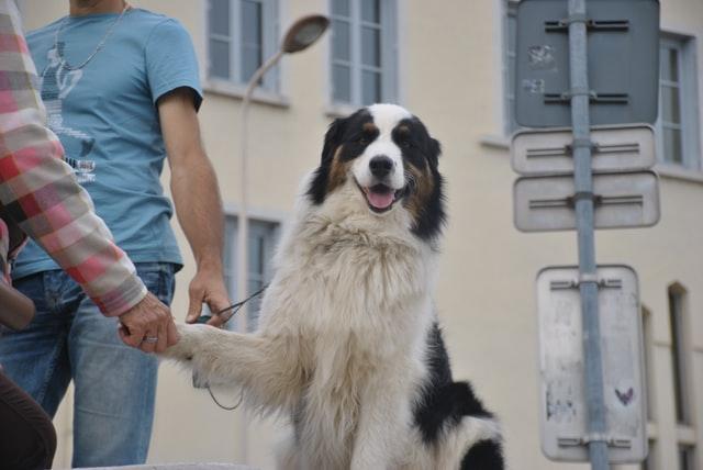 Tener una mascota ayuda a reducir el estrés causado por la pandemia