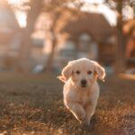 Algunos perros aprenden nuevas palabras con sólo cuatro repeticiones