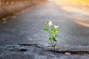 flor rompiendo asfalto