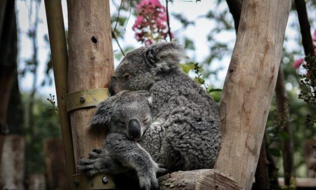 Proponen inundar Internet de abrazos de animales para conectar a las personas con la naturaleza
