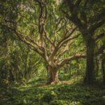 """El """"Bosque de los abrazos perdidos"""" rendirá homenaje a las víctimas de la pandemia"""