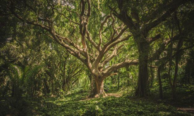 El «Bosque de los abrazos perdidos» rendirá homenaje a las víctimas de la pandemia