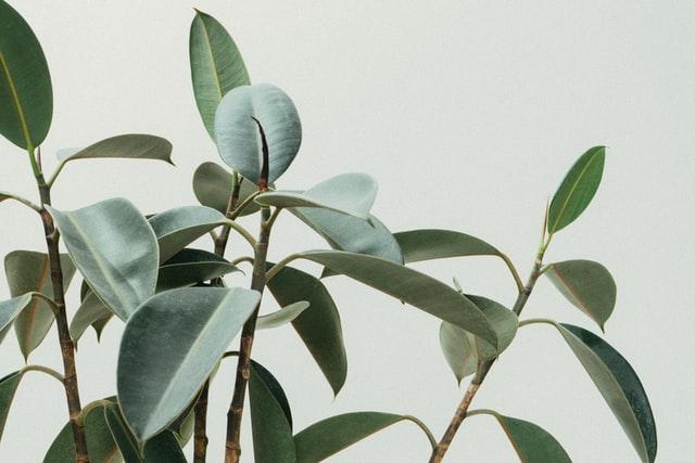 Las plantas tienen una «alarma» nocturna para sobrevivir